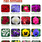 Fall 2012 Annual Picture Ad 3.png