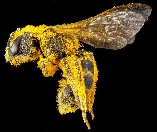2-golden-dusting-1600.jpg