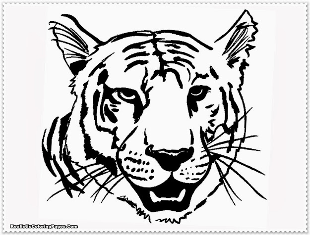 Realistic Tiger Coloring Pages With Tiger Coloring Pages