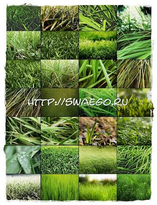 Green grass.Текстуры зелёной травы для Фотошопа,скачать.