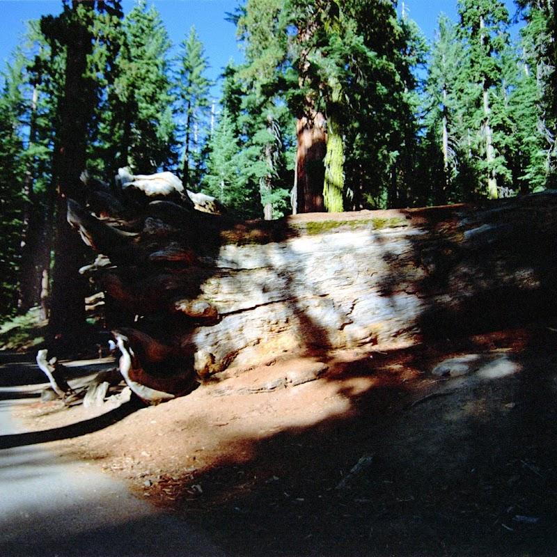 Yosemite_31.jpg
