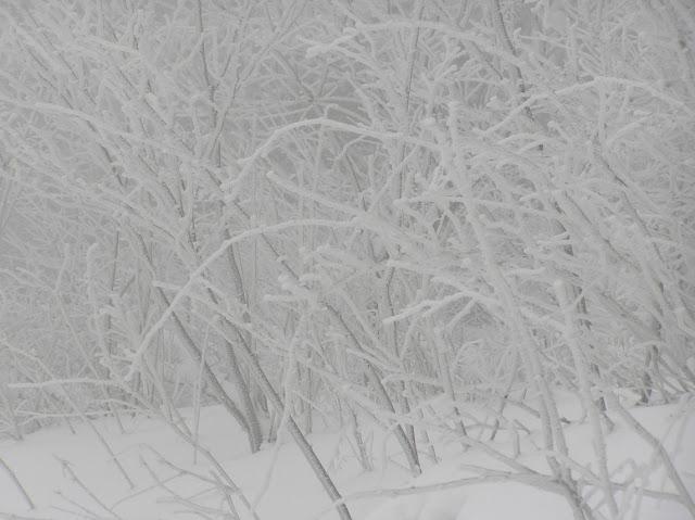 Zawody narciarskie Chyrowa 2012 - P1250037_1.JPG