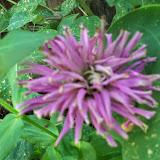 Gardening 2014 - 116_3425.JPG