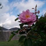 Gardening 2011 - 100_6957.JPG