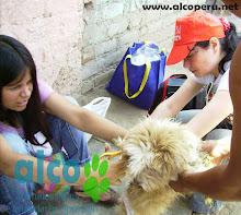 Campaña de asistencia en Mangomarca SJL (29)