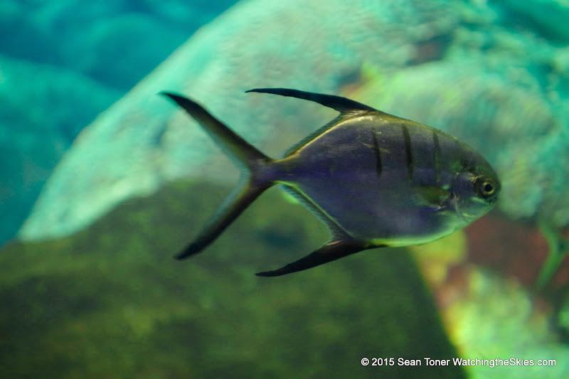02-08-15 Corpus Christi Aquarium and USS Lexington - _IMG0509.JPG