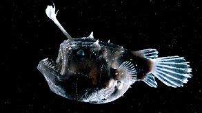 The Deep Sea thumbnail