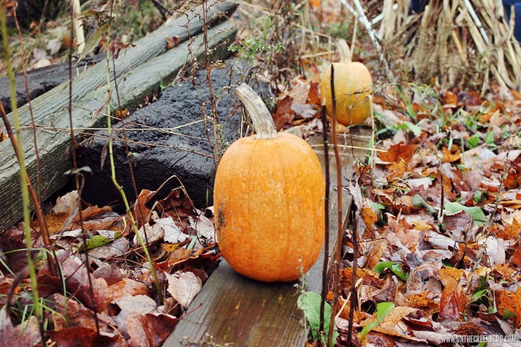 [pumpkin17%5B10%5D]