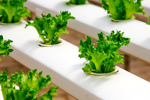 Four Tips for Thriving in Hydroponics
