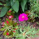 Gardening 2010, Part Three - 101_4995.JPG