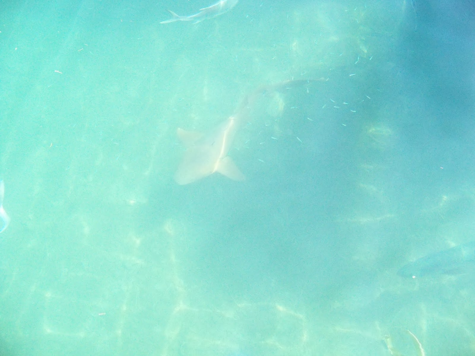 Key West Vacation - 116_5502.JPG
