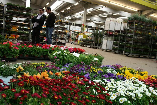Mercat de Flor i Planta Ornamental de Catalunya - IMG_3413.JPG