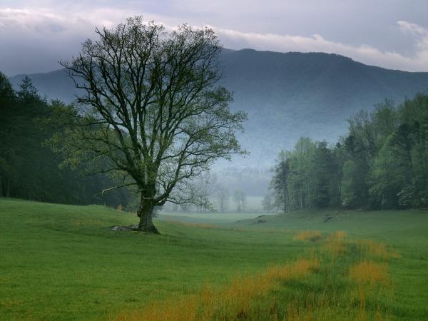 Wondrous Lands Of Deep, Beautiful Places 3