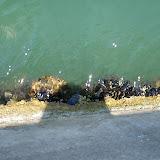 Monogràfic Marí 2010 - P5290239.JPG