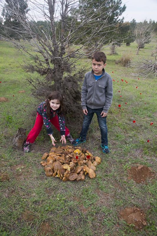 Ещё грибы