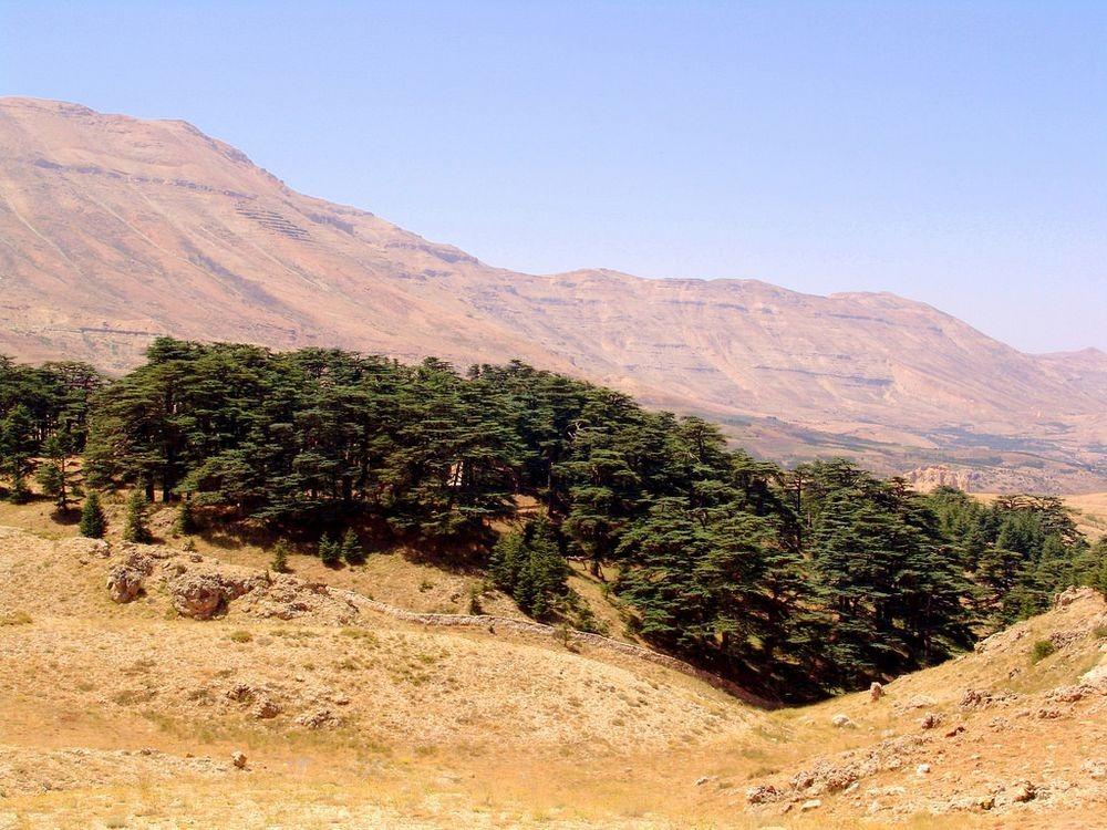 cedars-lebanon-2
