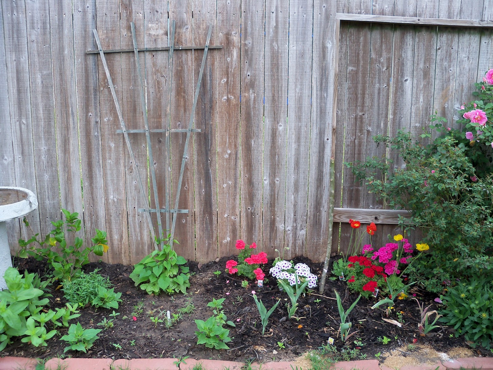 Gardening 2011 - 100_7159.JPG