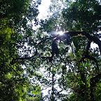 El techo del manglar