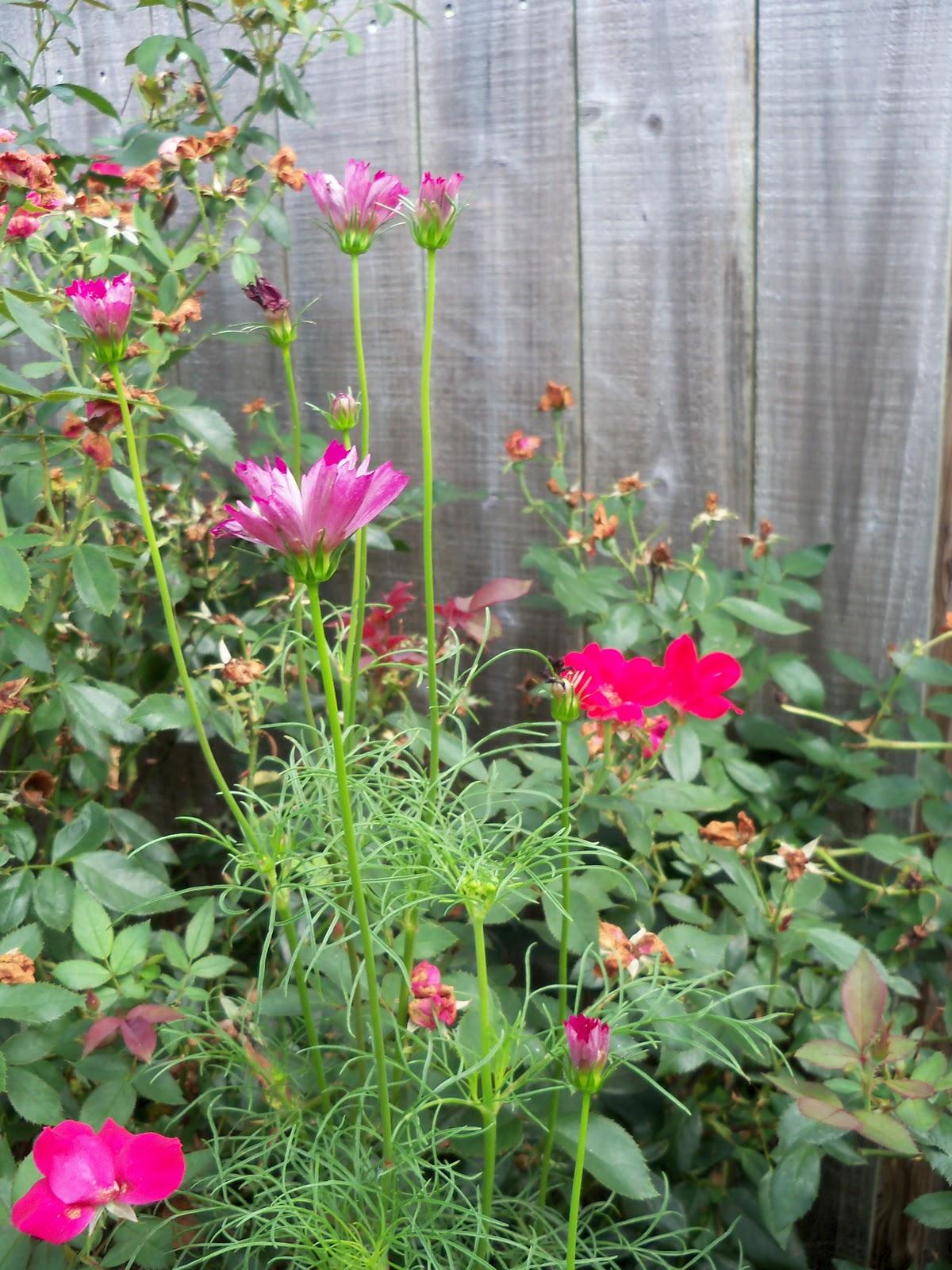 Gardening 2010, Part Three - 101_5217.JPG
