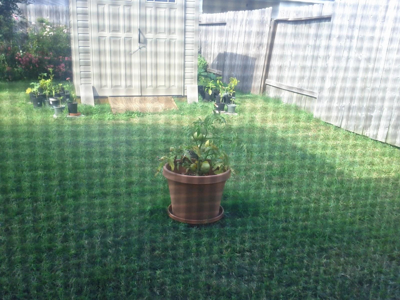 Gardening 2012 - IMG_20120529_172656.jpg