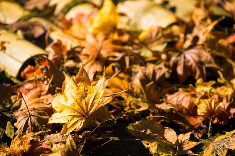 昭和記念公園 日本庭園 紅葉 写真14