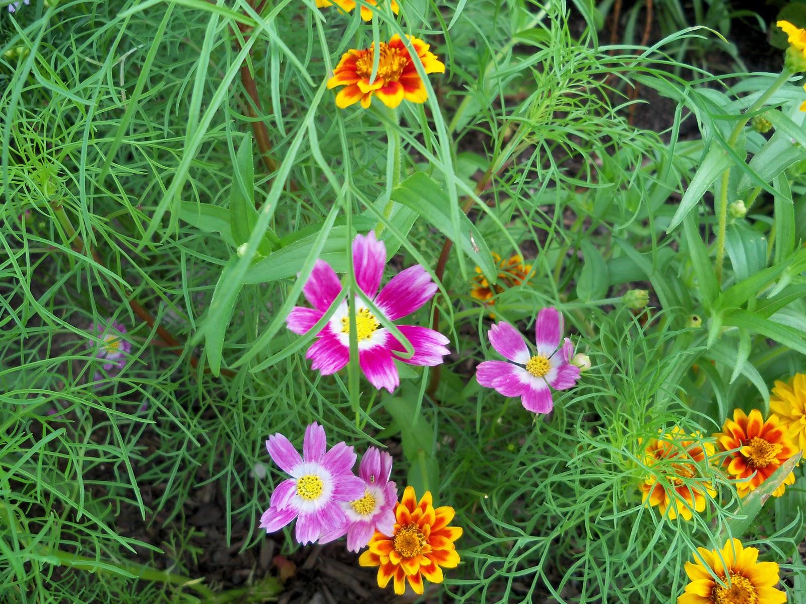 Gardening 2010, Part Three - 101_3797.JPG