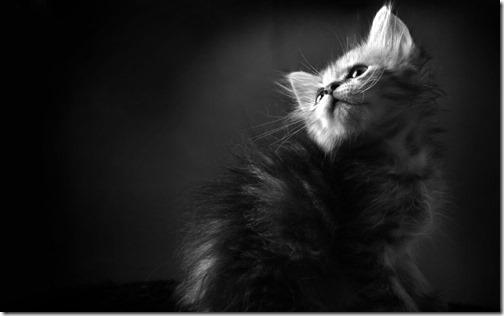 fotos de gatos (22)