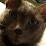 Cheri Johnson's profile photo