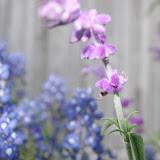 Gardening 2012 - IMG_2795.JPG