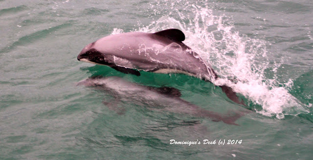 Dolphin swmiming in the water