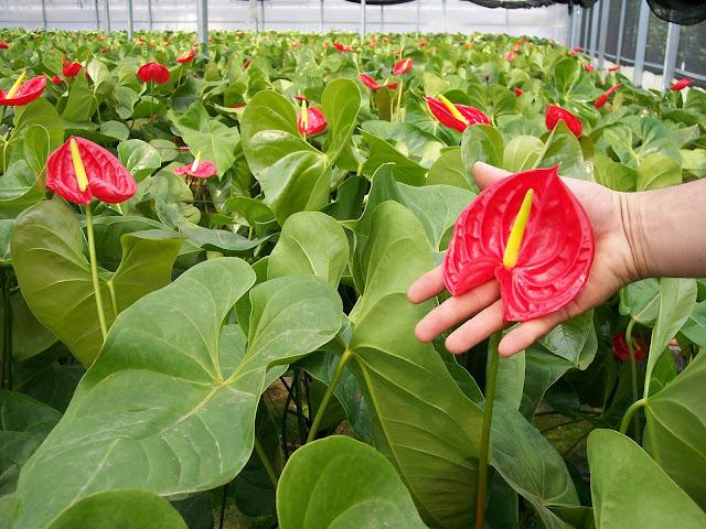 Cultivo de plantas de interior. - 100_0253.JPG