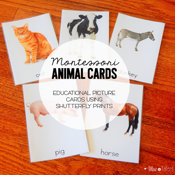 Montessori Animal Cards Shutterfly Prints