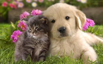 گربه های ملوس  A delicate cats
