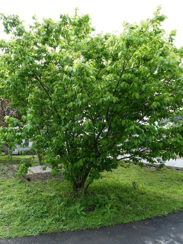Yilan, Neicheng - P1030432.JPG