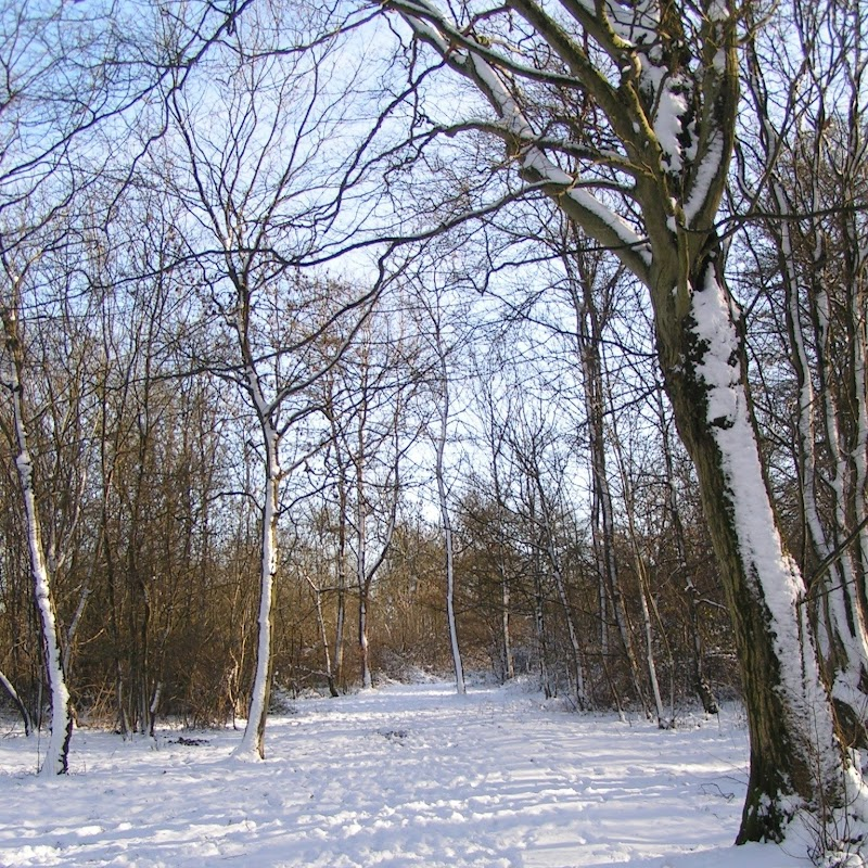 Tattenhoe_14 Snowy Trees.jpg