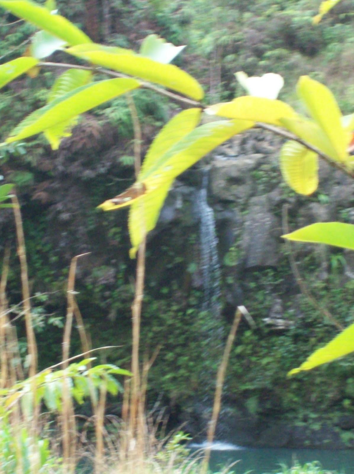 Hawaii Day 5 - 114_1485.JPG