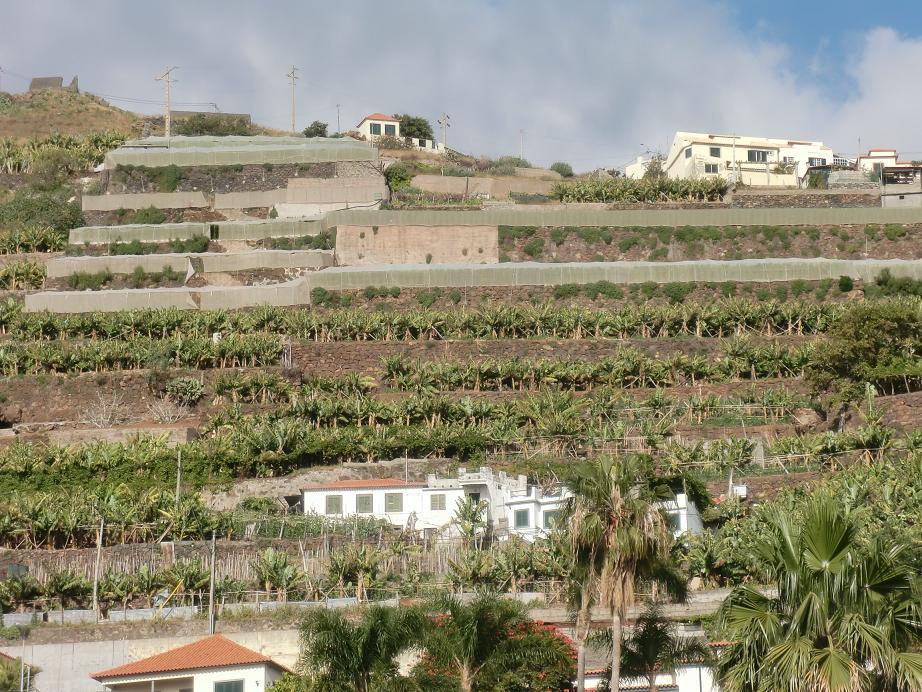 La intensidad de la ocupación del territorio en la isla de Madeira genera unos paisajes típicos escalonados por el aprovechamiento agrícola en terrazas de plataneras, viñas, y otros frutales adaptados al clima y el suelo de la isla. (ver en Google map)