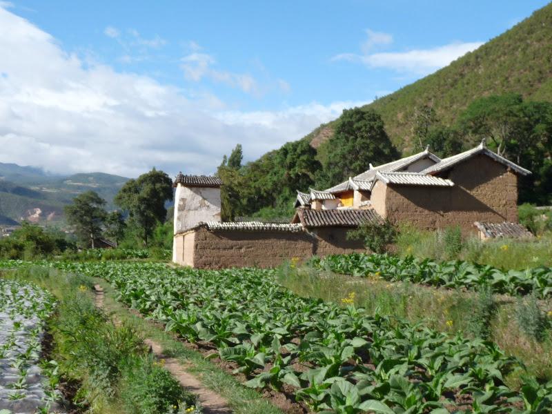 Chine . Yunnan.SHA XI 2 et retour à Lijiang - P1250265.JPG