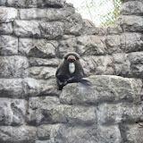 Zoo Snooze 2015 - IMG_7313.JPG