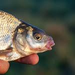 20140906_Fishing_Lysyn_017.jpg