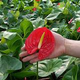 Cultivo de plantas de interior. - 100_0252.JPG
