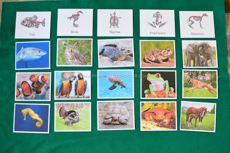 Montessori Inspired Animal Classification Activities