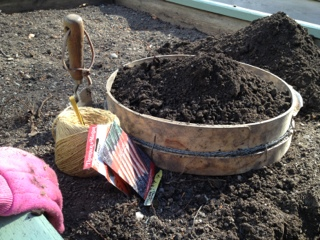 Preparing soil for growing carrots