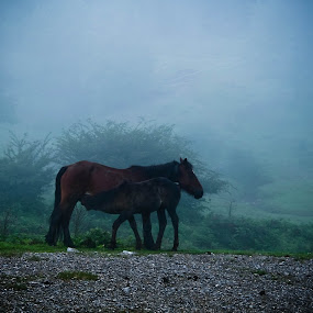 by Leire Unzueta - Animals Horses