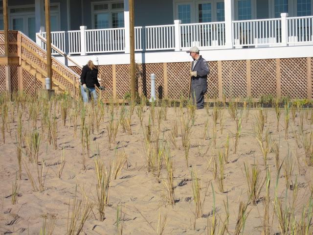 West Wharf Dune Restoration - DSCN2833.JPG