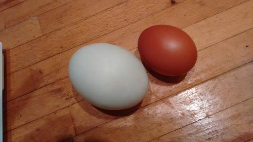 store æg