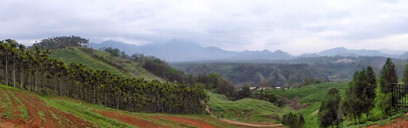Puli, Nantou county, cueillette de thé - P1050524.JPG