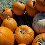 Pumpkin Patch - 115_8236.JPG
