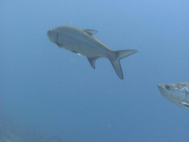 Bonaire 2011 - PICT0059.JPG
