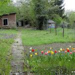 Forêt de Carnelle : jardin en lisière